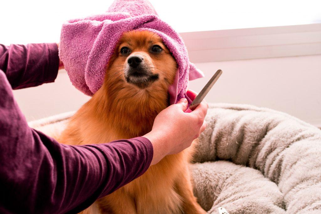 Pet Salon For Sale